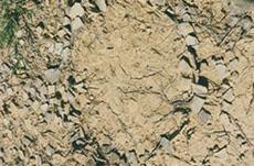 fossiles de dinosaures musée