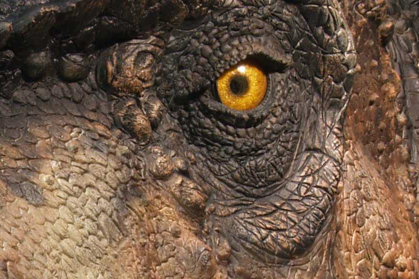 tete tyrannosaurus-rex