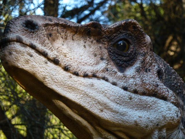 dinosaure carnivore