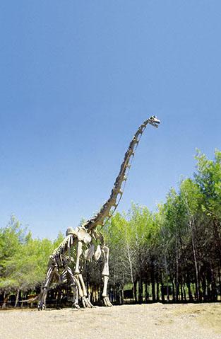 squelette dinosaure taille réelle