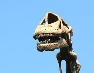 squelette brachiosaure musée