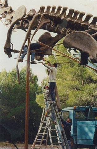 squelette dinosaure parc