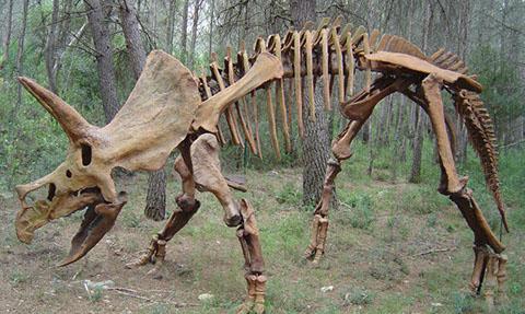 tricératops musée france