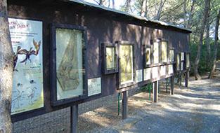 reconstitutions musée dinosaures